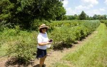 Blueberry Farm_20160625_008