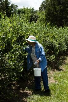 Blueberry Farm_20160625_031
