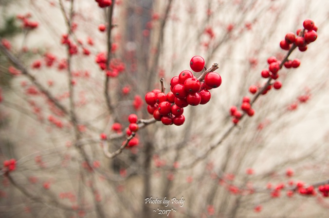Berries_20170204_006