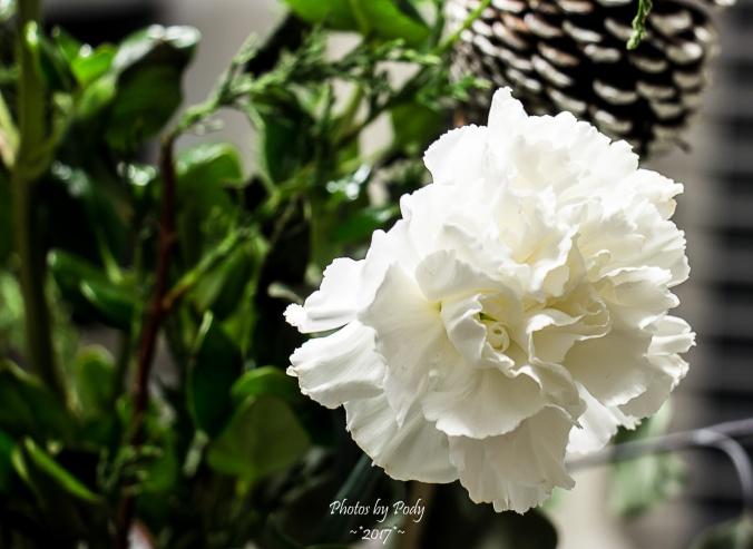 Flower_20170110_012