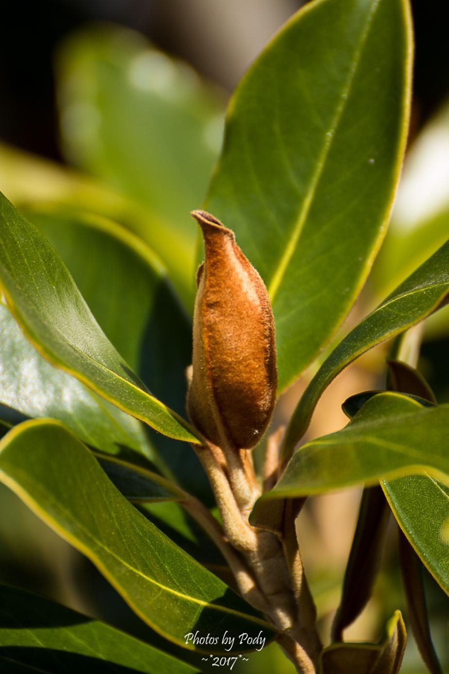 Magnolia_20170205_011