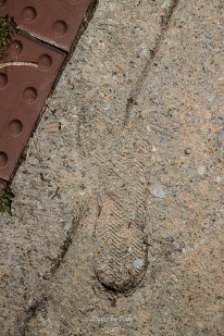 Concrete_20170403_016