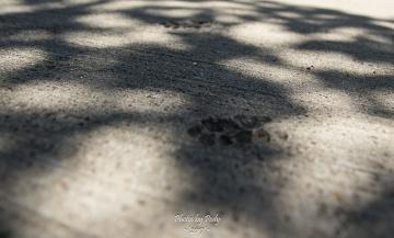 Concrete_20170403_024