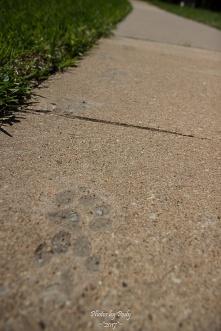 Concrete_20170403_035