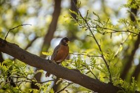 Levelland Birds_20170408_018