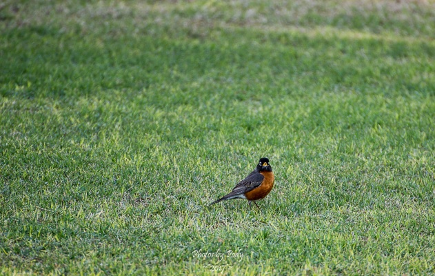 Levelland Birds_20170408_048