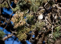 Levelland Birds_20170408_086