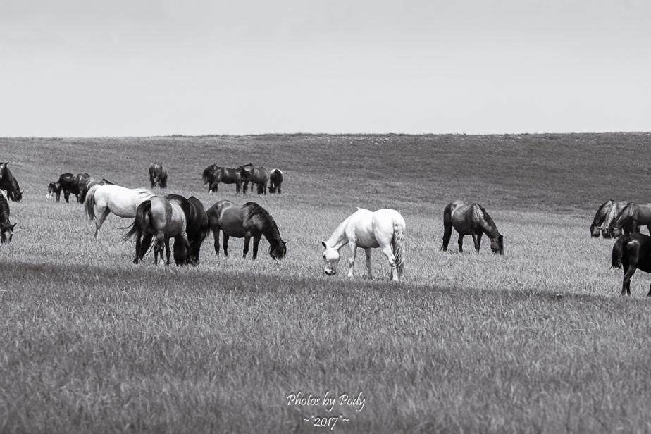 Drummond Ranch_20170527_016