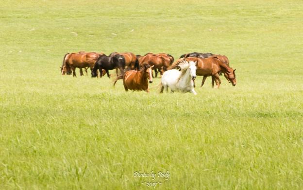 Drummond Ranch_20170527_024