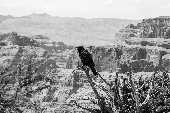Grand Canyon_20150709_078