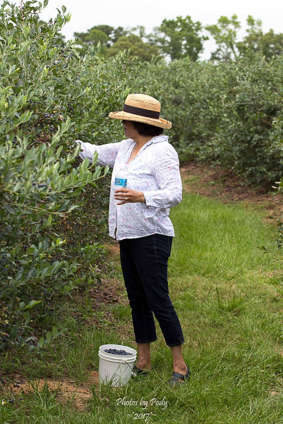 Quitman Blue Berry Farm_20170617_026