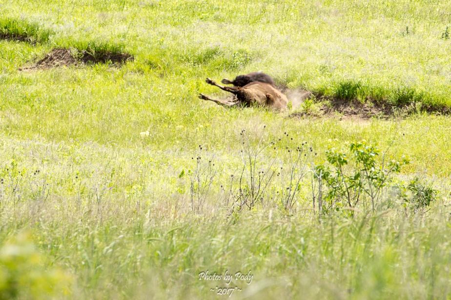 Tallgrass Prairie_20170528_022
