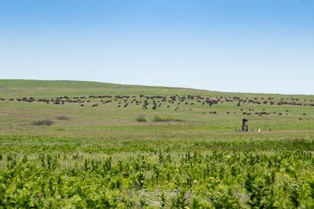 Tallgrass Prairie_20170528_068