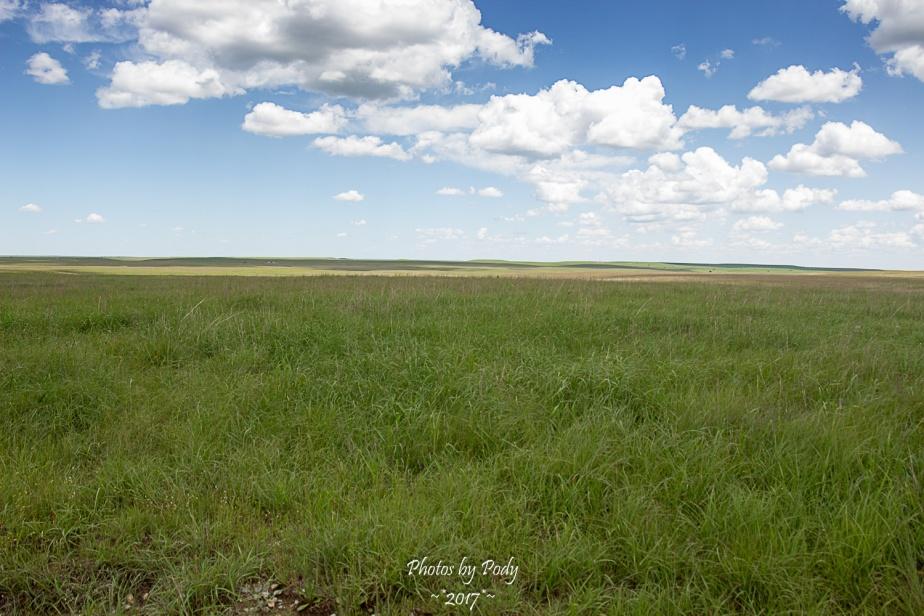 Tallgrass Prairie_20170528_087