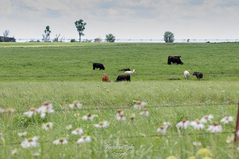 Tallgrass Prairie_20170528_097