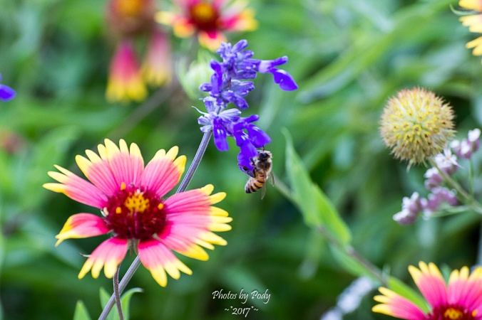 Bees_20170520_004