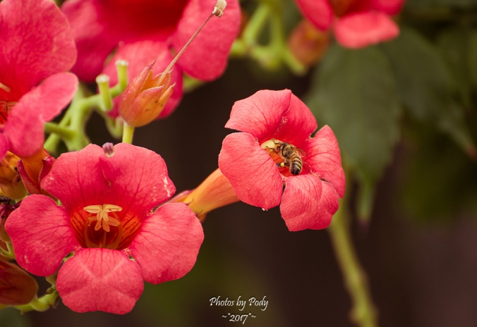 Bees_20170622_003