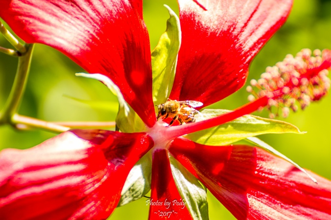 Bees_20170704_004