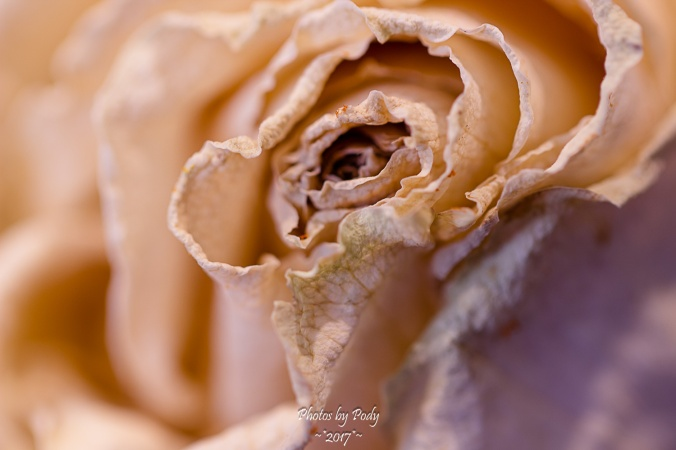 Canon 100mm Macro white Flower_20171016_010