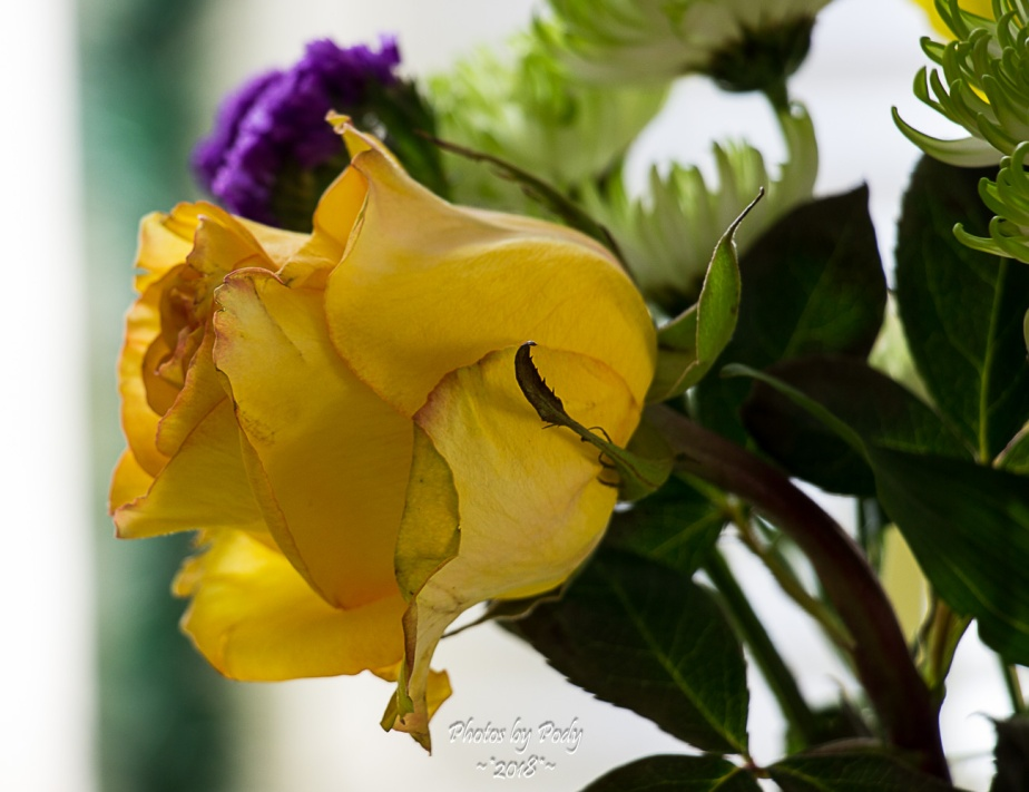 Juanita's Birthday Flowers_20180108_001