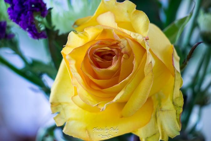 Juanita's Birthday Flowers_20180108_007