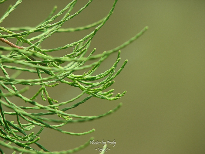 Ft_Worth_Botanical_Garden_20120513_055